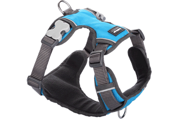 Red Dingo Dog Harness Padded Harness Turquoise DH-PH-TQ