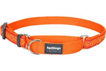 Red Dingo Martingale Collar Cosmos Orange MC-CO-OR