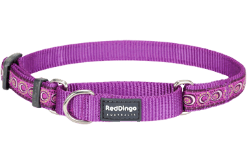 Red Dingo Martingale Collar Cosmos Purple MC-CO-PU