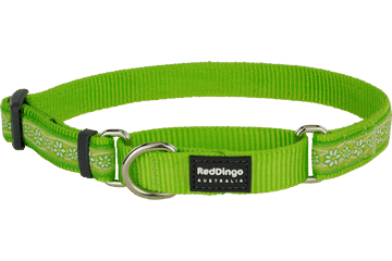 Red Dingo Martingale Collar Daisy Chain Lime Green MC-DC-LG