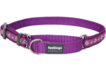 Red Dingo Martingale Collar Daisy Chain Violet MC-DC-PU (DMS032 / DMM062 / DML092)