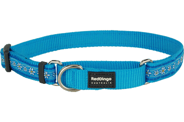 Red Dingo Martingale Collar Daisy Chain Turquoise MC-DC-TQ
