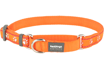 Red Dingo Martingale Collar Desert Paws Orange MC-DP-OR