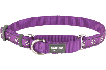 Red Dingo Martingale Collar Desert Paws Purple MC-DP-PU