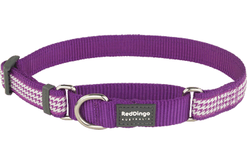 Red Dingo Martingale Collar Fang It Purple MC-FG-PU