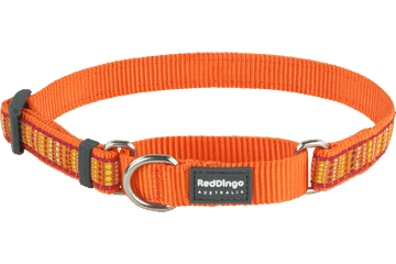 Red Dingo Martingale Collar Lotzadotz Orange MC-LD-OR